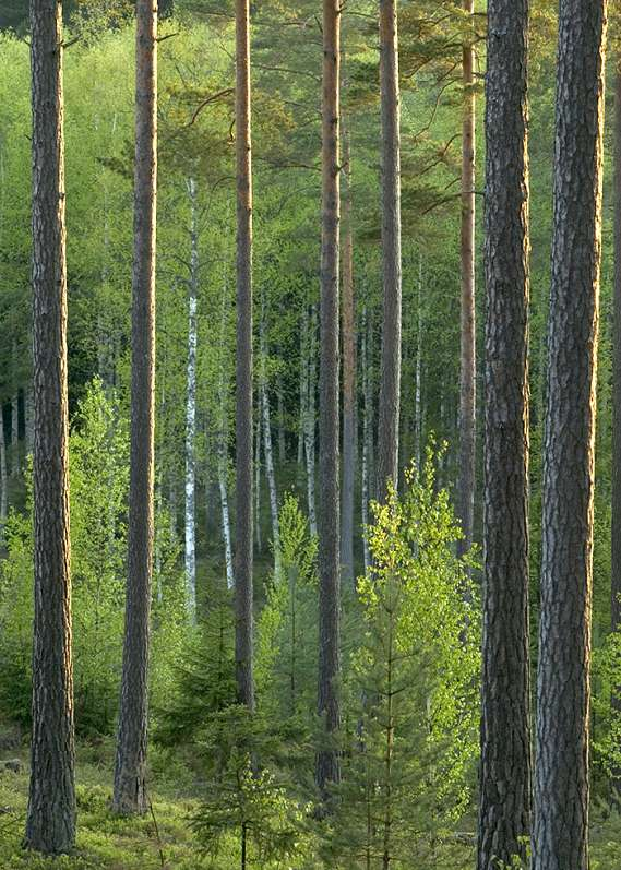 Sustainability - Managed Forestry